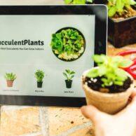 7 Best Places to Buy Succulents Online 2021
