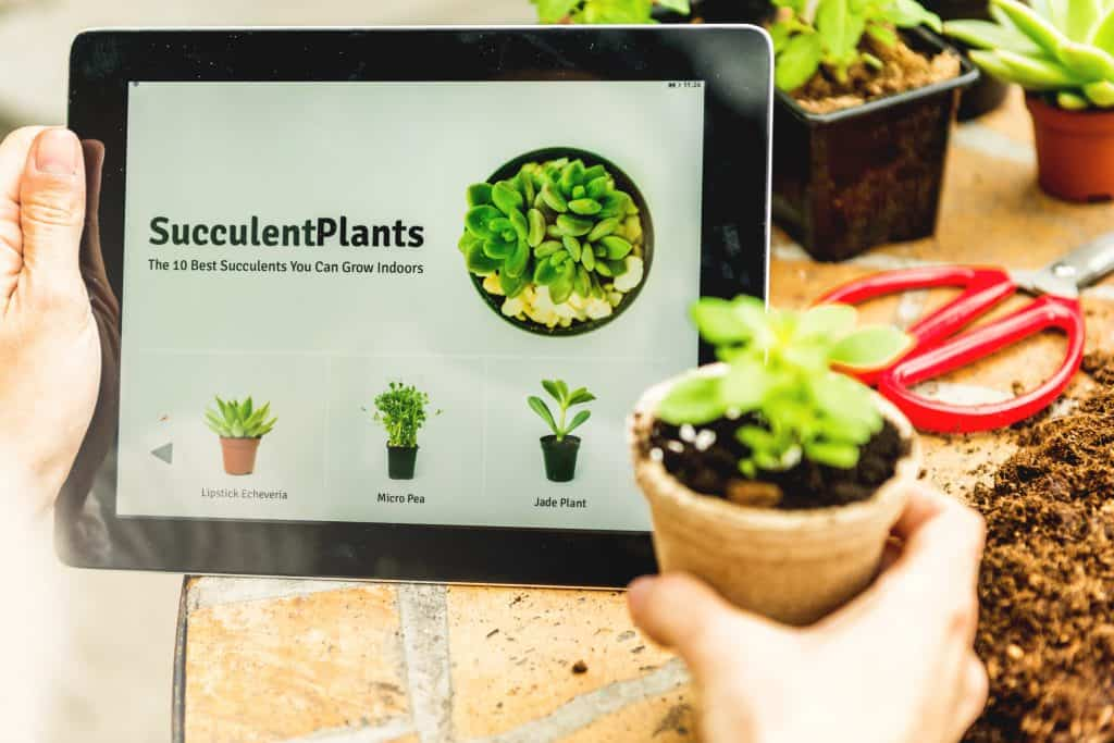 7 Best Places to Buy Succulents Online 2021