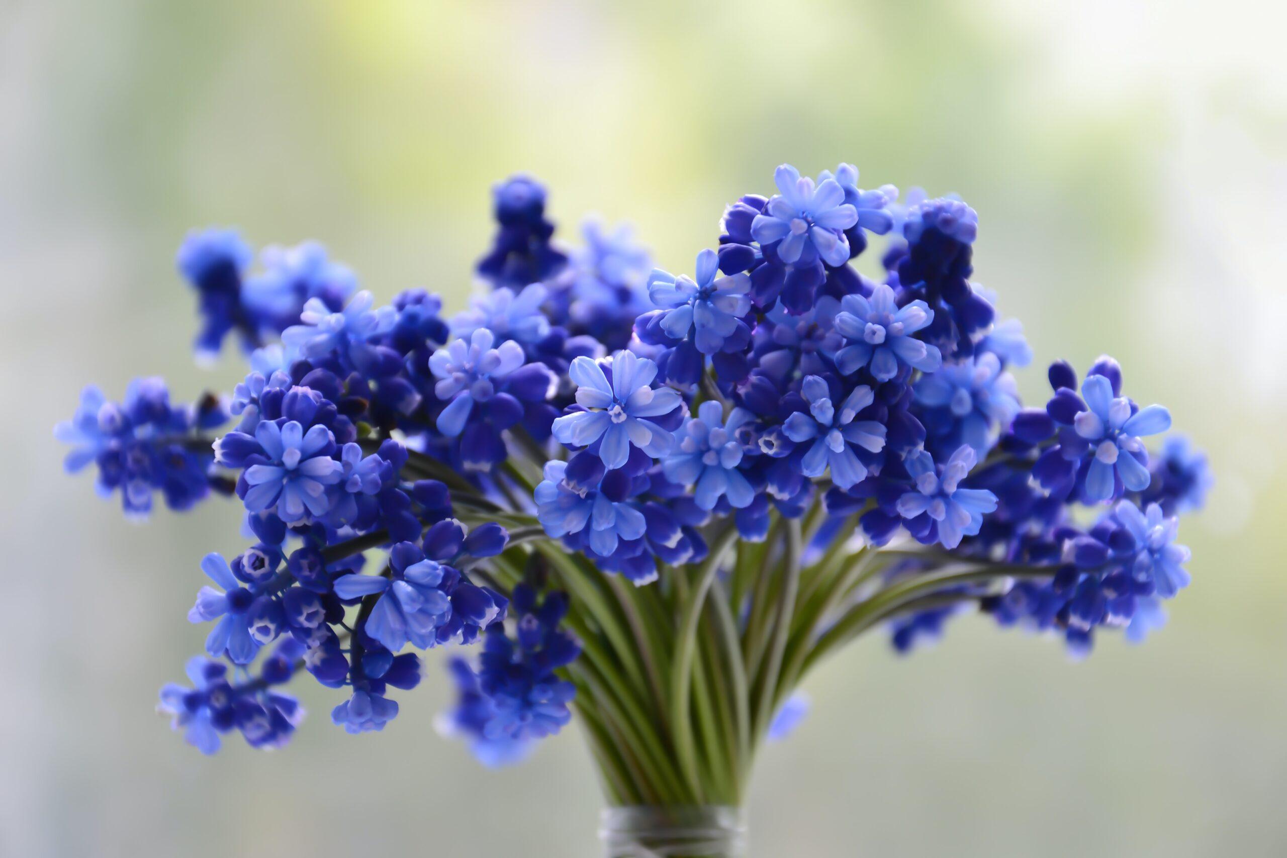 Aromatic Eye-catching Grandiose Popular Flowers